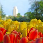 WashingtonParkTulipFestival_副本